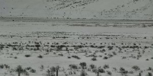 View of the Jackson Hole, Elk Refuge East